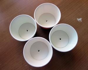 papercuphole