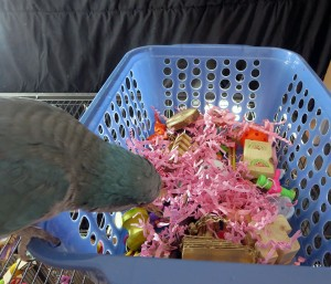 Forage/Foot Toy Basket